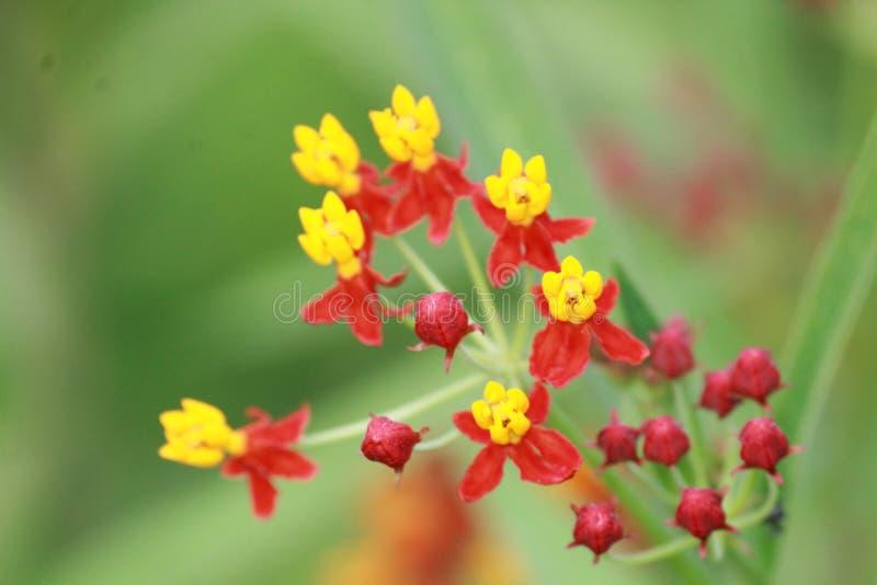 абстрактный спектр лепестков цветка пожара стоковое изображение