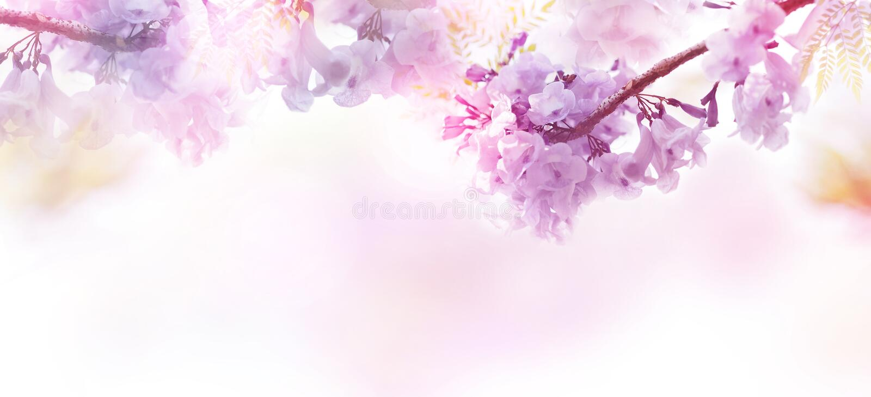 Абстрактный флористический фон фиолетовых цветков с мягким стилем стоковое фото rf