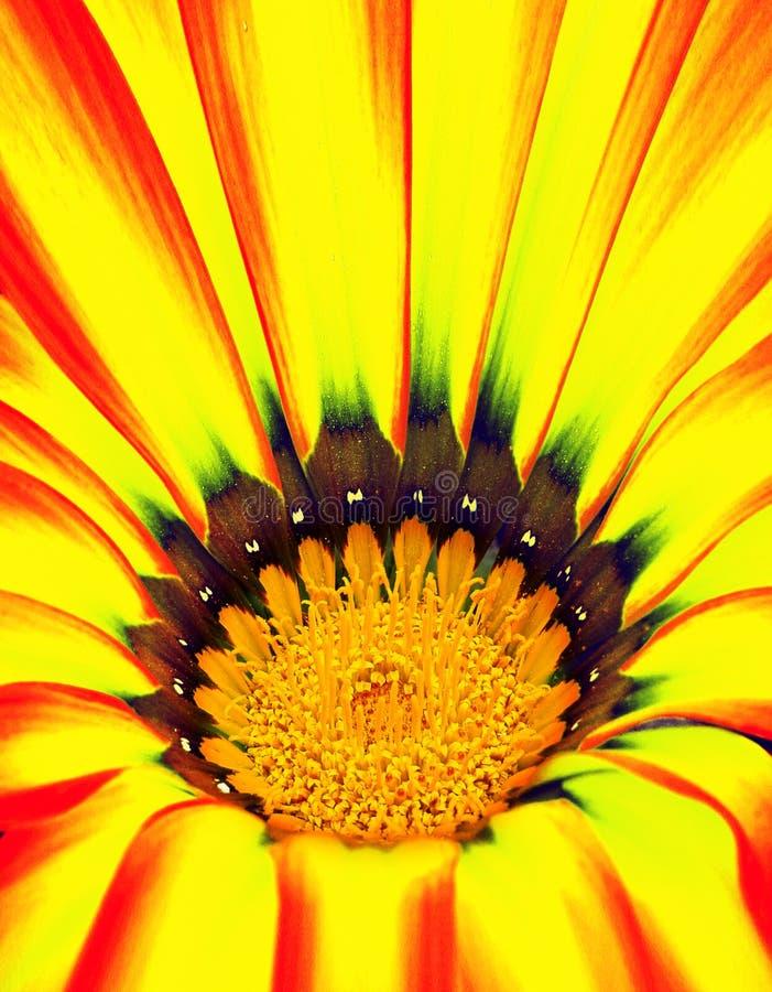 абстрактный цветок крупного плана стоковые фото