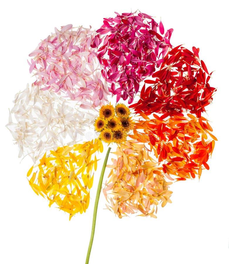 Абстрактный цветок на белой предпосылке стоковое фото