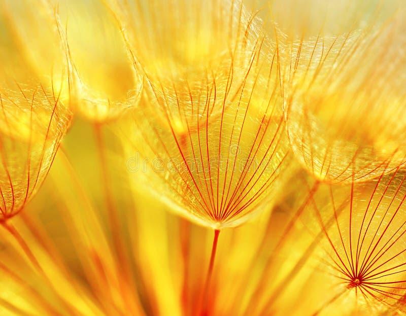 абстрактный цветок одуванчика предпосылки стоковое изображение