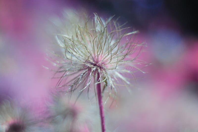Абстрактный цветочный узор с сюрреалистическим цветком против красоч стоковое фото