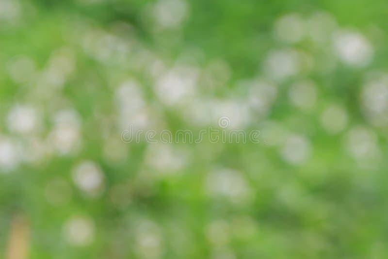 абстрактный backdop предпосылки нерезкости флоры фокуса природы солнечний свет вне стоковые изображения rf
