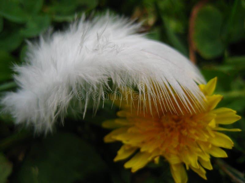 Абстракция фото макроса с белым пером и полем цветка стоковые фотографии rf