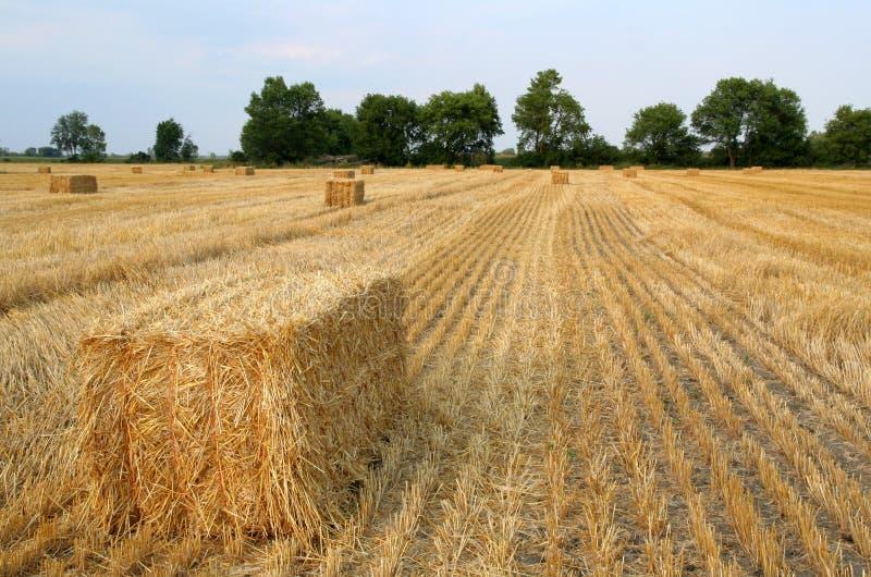августовское сено поля стоковое фото