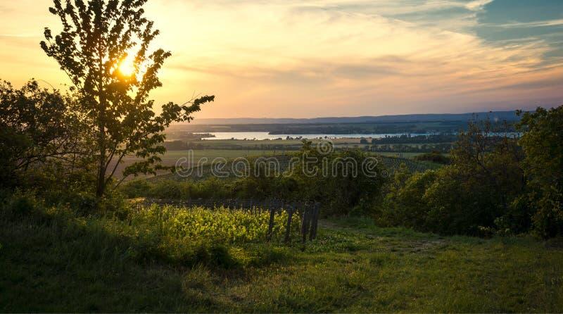 Август в виноградниках стоковое изображение rf