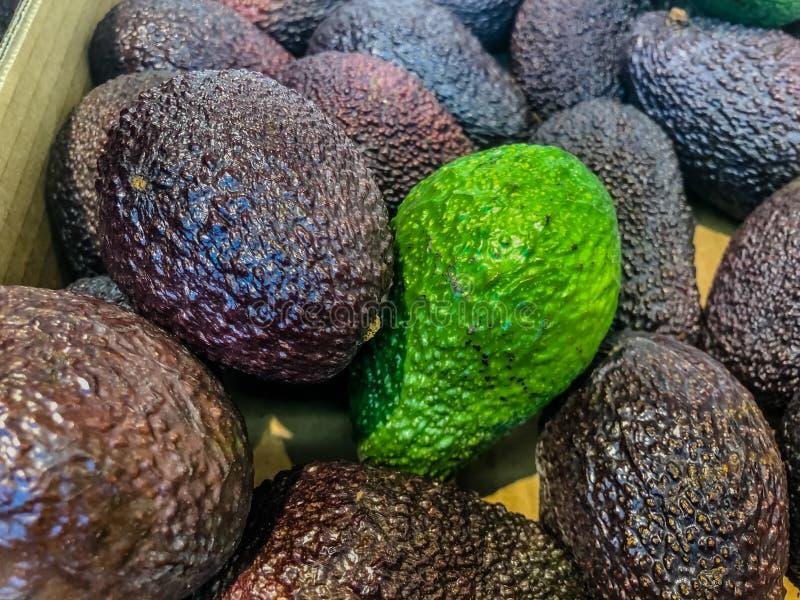 Авокадо также ссылается к плодоовощ ` s дерева авокадоа, который ботанически большая ягода содержа одиночное семя Авокадоы очень стоковое фото