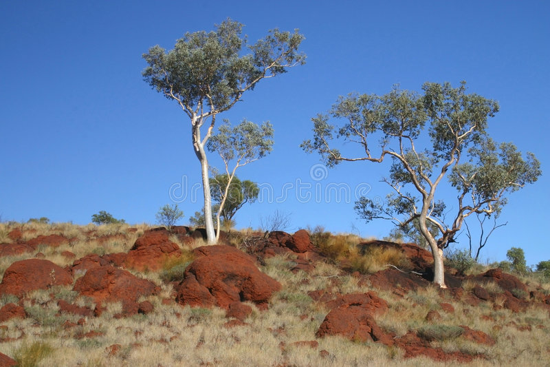 австралийские валы стоковое фото