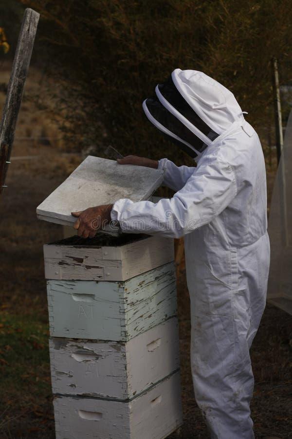 Австралийский фермер клоня его крапивницы пчелы стоковое фото
