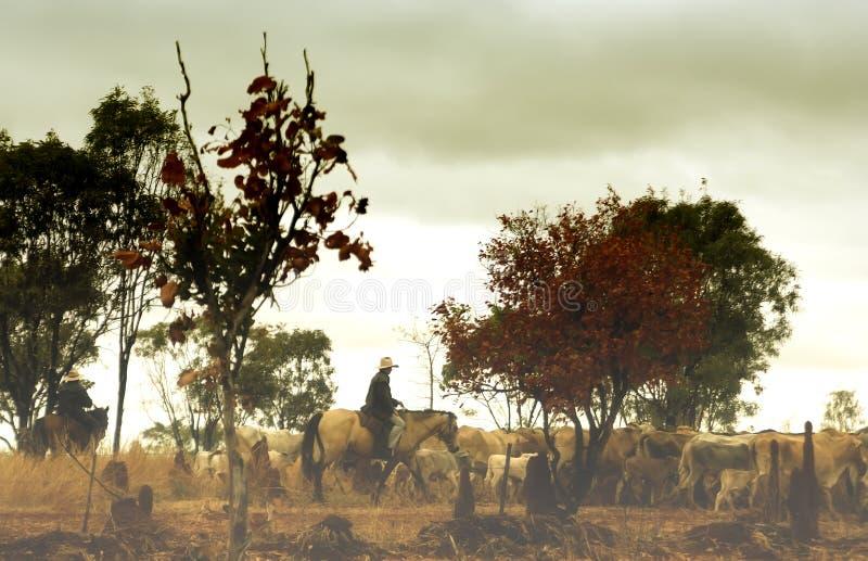 австралийское захолустье ковбоя стоковые фотографии rf