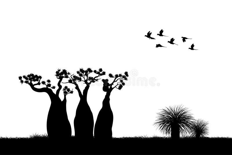 австралийский ландшафт Черный силуэт коалы и попугаев на белой предпосылке Природа Австралии бесплатная иллюстрация