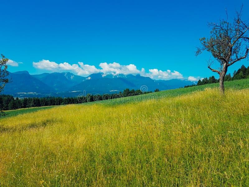 Австрия - луг Slpine стоковые изображения rf