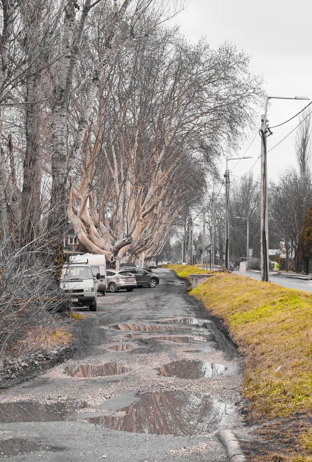 Автомобили автостоянки под старыми деревьями стоковые фотографии rf