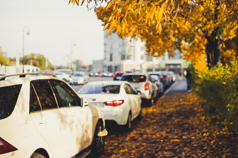 Автомобили и деревья осени на улице города стоковое изображение rf