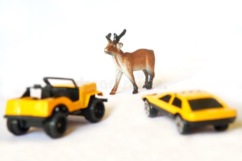 Автомобили около оленей стоковое изображение rf
