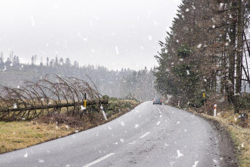 Автомобиль безопасно непрерывный на дороге освободился от упаденного дерева Упаденное дерево через дорогу после сильного ветера Д стоковая фотография rf
