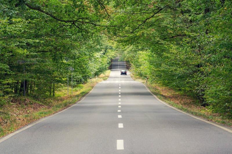 Автомобиль двигая на местную дорогу с ломанной линией в красивом зеленом лесе с ветвями удлиняя над дорогой, driverless технологи стоковое фото rf