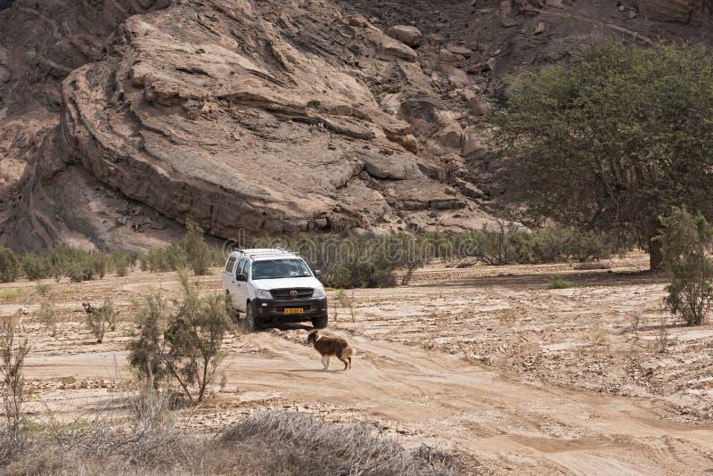 Автомобиль на дороге песка в сухом русле реки реки swakop близко стоковое фото rf
