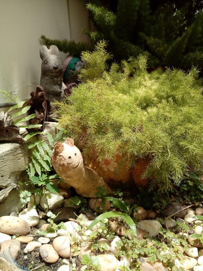 Агашко черепахи стоковое изображение