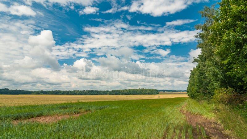 аграрное лето ландшафта взгляд поля с прокладкой леса на заднем плане стоковые фотографии rf