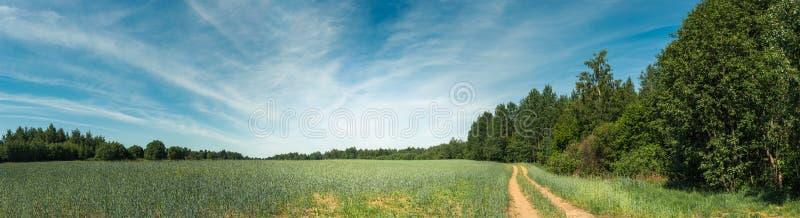 аграрное лето ландшафта Панорамный взгляд поля зерна под голубым небом с светлой пасмурностью стоковое фото