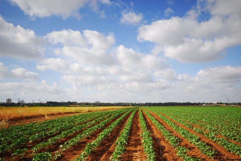 аграрное поле большое стоковая фотография rf