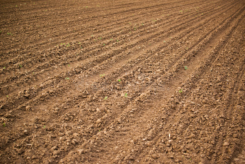 Аграрное поле, почва пахотной земли стоковая фотография rf