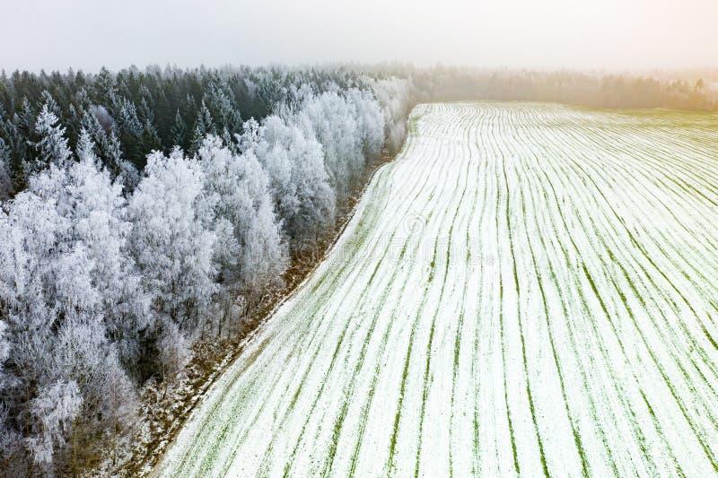 Аграрные поля в предыдущей весне Деревья в антенне изморози стоковое фото rf