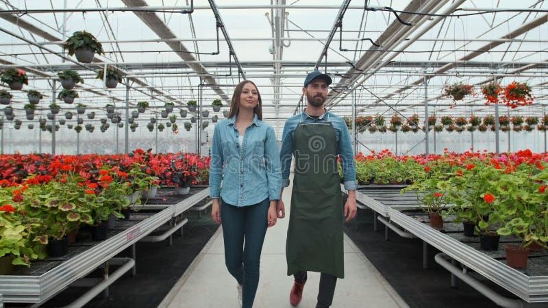 Аграрный инженер идет через промышленный парник с профессиональным фермером Они рассматривают государство заводов и стоковое изображение rf