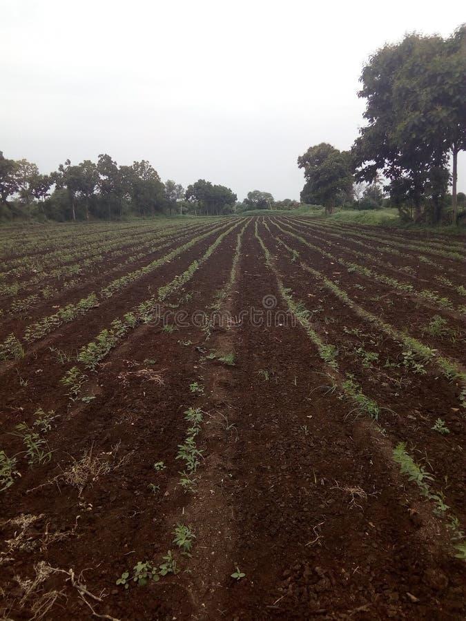 Аграрный хранить и засевать красного грамма стоковые фото