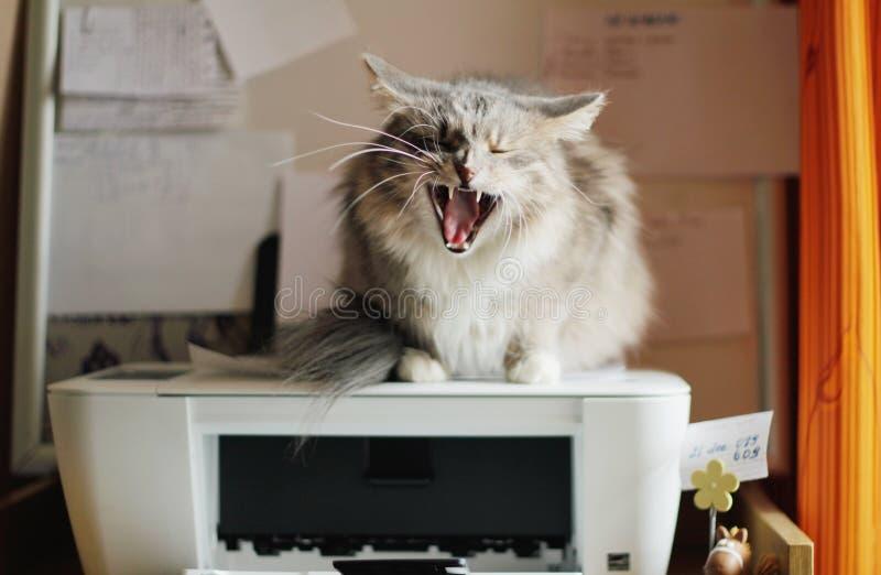 агрессивныйый кот стоковые фото