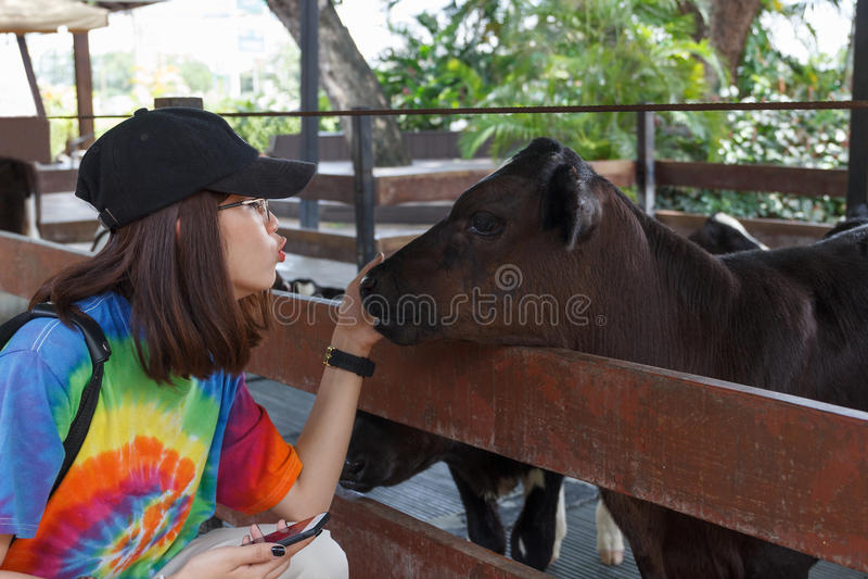 Азиатская красивая женщина влюбленность поцелуя для коровы младенца стоковая фотография
