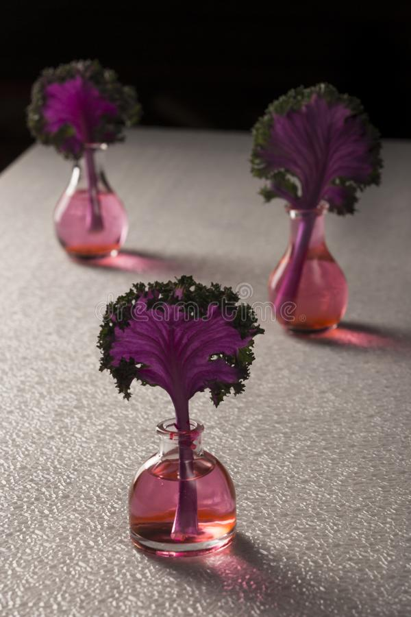 Азиатская листовая капуста в вазах стоковые изображения