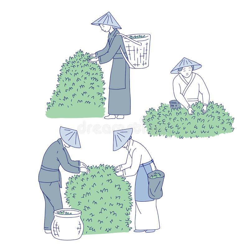Азиатские листья чая сборов работников от куста Линия люди вектора установленная искусства в аграрном традиционного костюма китай бесплатная иллюстрация