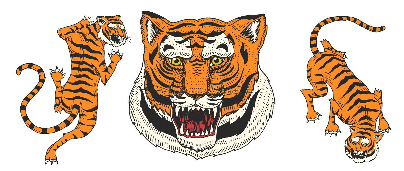 Азиатские тигры в винтажном японском стиле для логотипа закройте лицевая сторона Коты диких животных Хищники от джунглей вычерчен иллюстрация штока