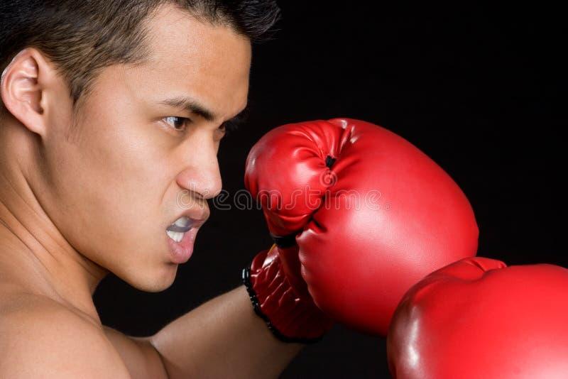 азиатский боксер стоковые изображения