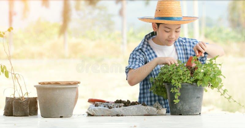 Азиатский мальчик подготавливает черную почву к меньшему заводу дальше в саде стоковые фотографии rf