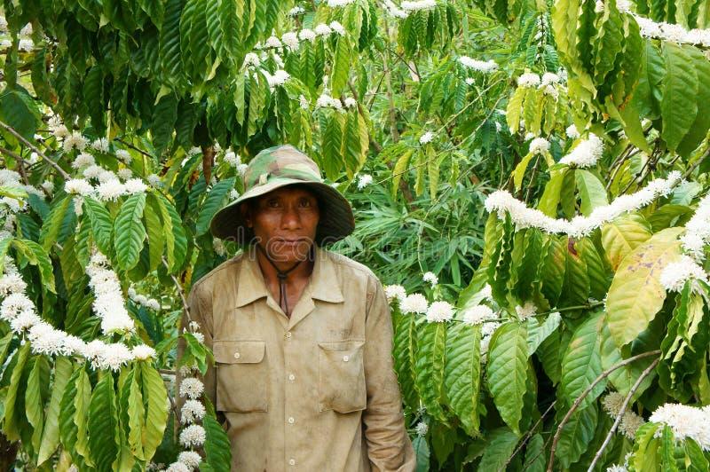 Азиатский фермер, дерево кофе, кофейная плантация стоковое изображение