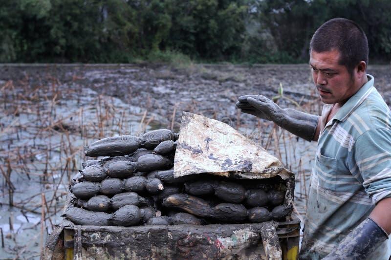 Азиатский фермер стоковая фотография rf