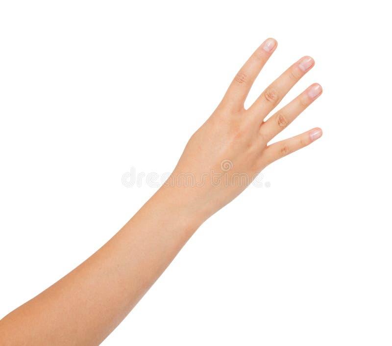 Азиатское, корейское шоу 4 руки изолированный на белой предпосылке, космосе экземпляра стоковые изображения