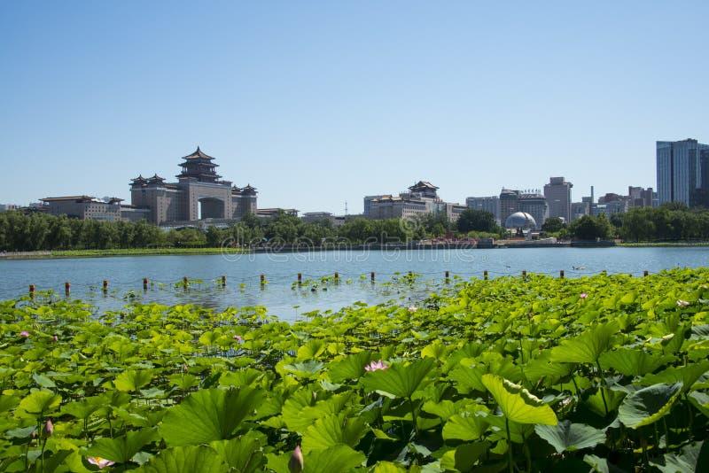 Азия Китай, Пекин, парк пруда лотоса, пруд лотоса, железнодорожный вокзал Пекина западный стоковое фото