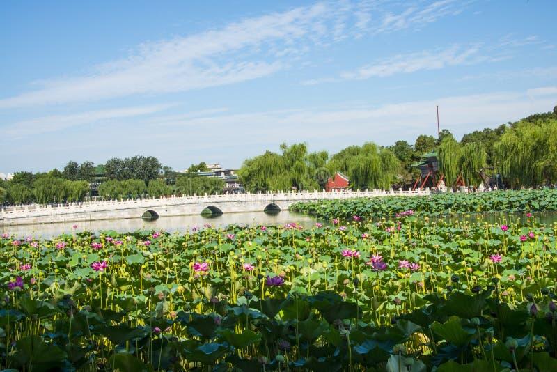 Азия Китай, Пекин, парк Beihai, пруд ŒLotus ¼ landscapeï лета, каменный мост стоковые изображения rf