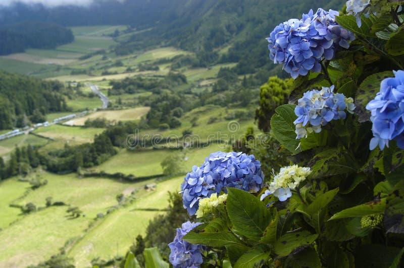 Азорские островы стоковое фото