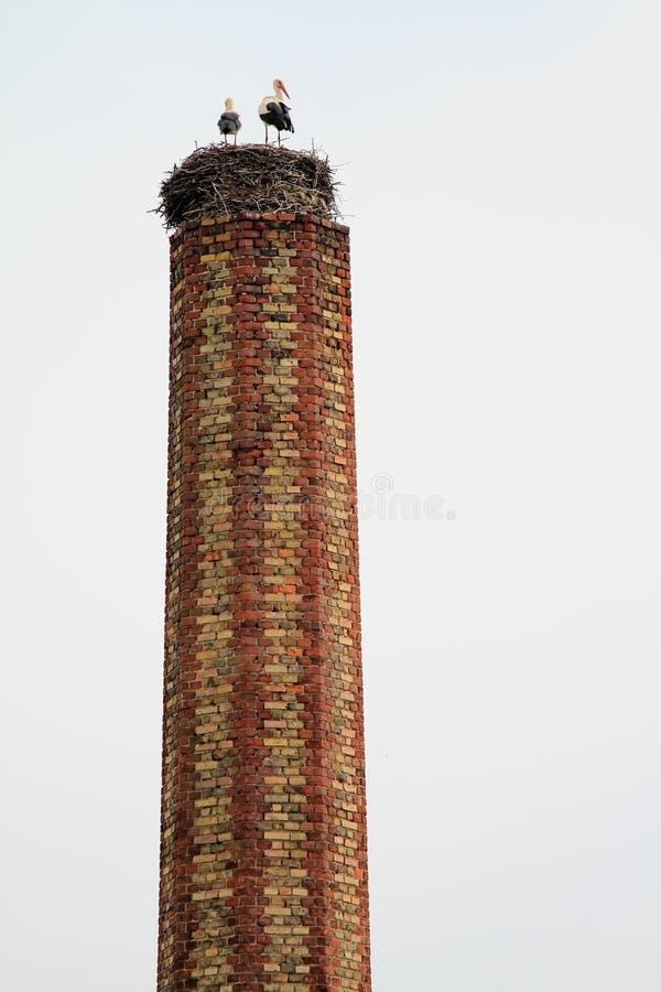 аисты печной трубы стоковая фотография rf