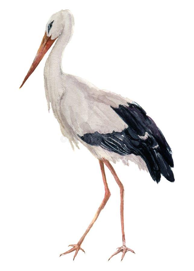 Аист акварели белый Иллюстрация птицы аиста изолированная на белой предпосылке Для дизайна, печатей или предпосылки иллюстрация штока