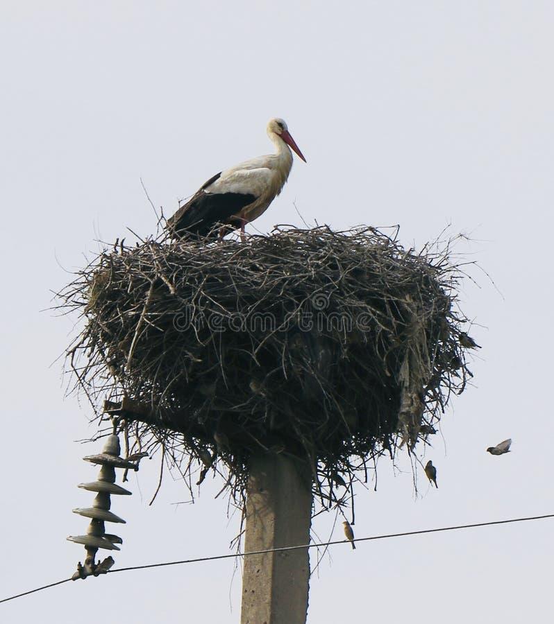 аист в гнезде стоковые фото