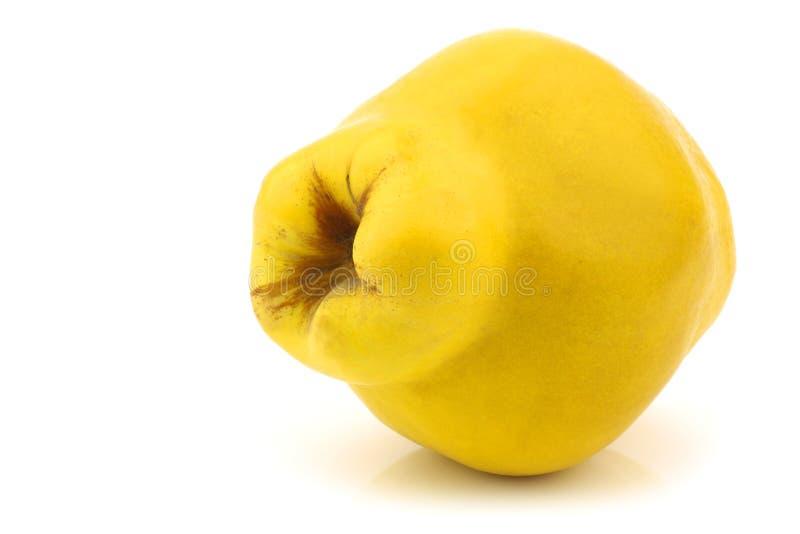 айва oblonga плодоовощ cydonia одиночная стоковая фотография rf
