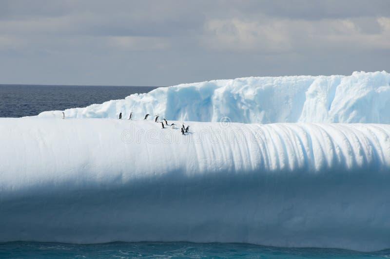 Айсберг с пингвинами стоковые фотографии rf