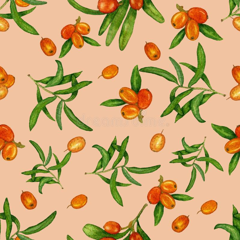Акварель, безшовная картина с ягодами и крушина моря на покрашенной предпосылке иллюстрация штока
