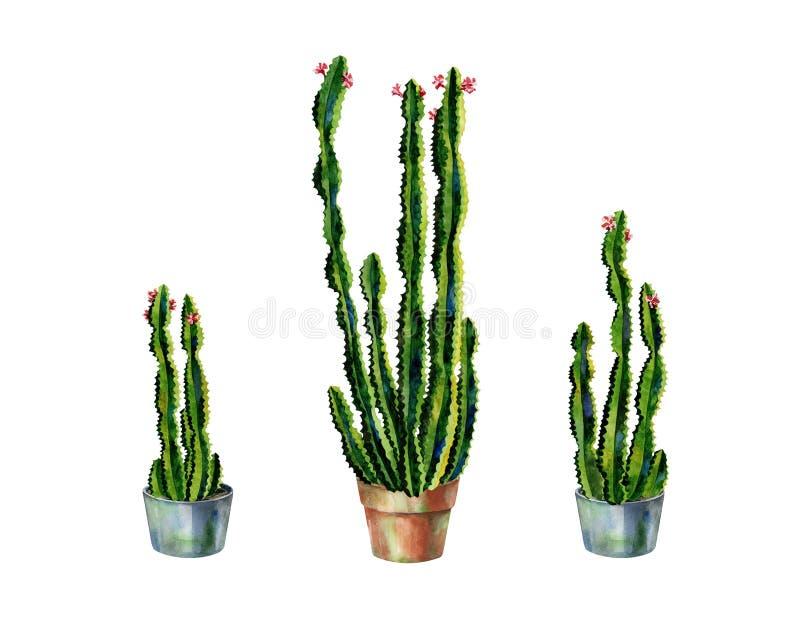 Акварель кактусов Набор иллюстрации кактуса стоковое фото